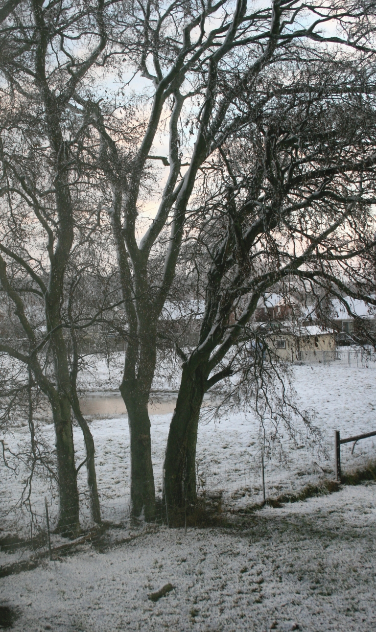 snow-the-morning-after-029