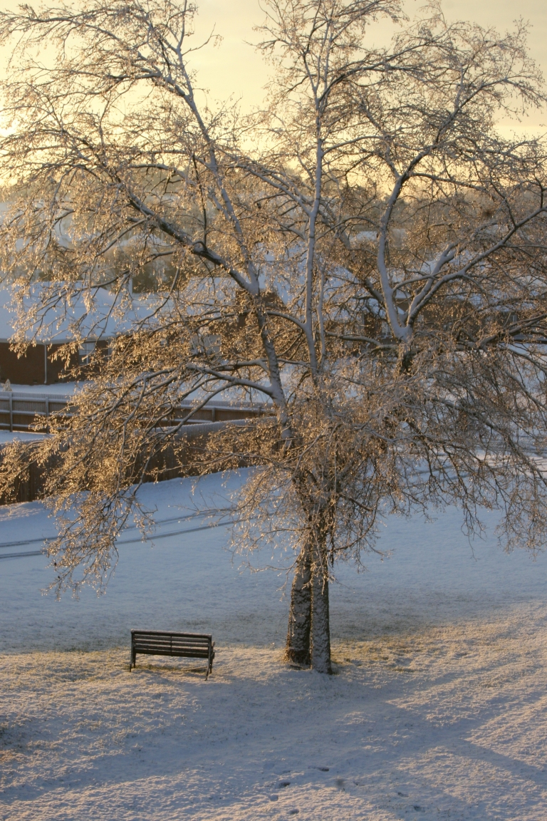 snow-the-morning-after-054